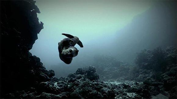 În largul coastelor Australiei a fost filmată o sirenă