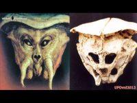 Un craniu misterios a fos găsit în munţii Rodopi din Bulgaria