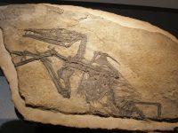 Pterosaur viu în anul 1856