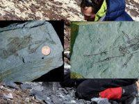 O fosilă de umanoid veche de 600 de milioane de ani a fost găsită în Antarctica