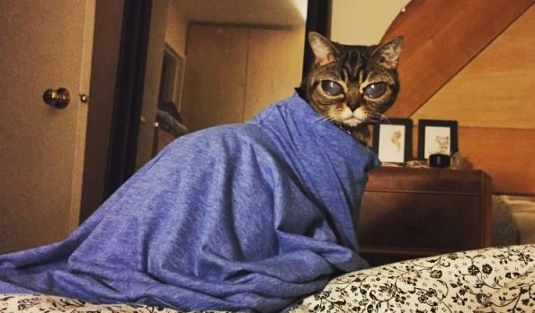 """Pisica """"extraterestră"""""""